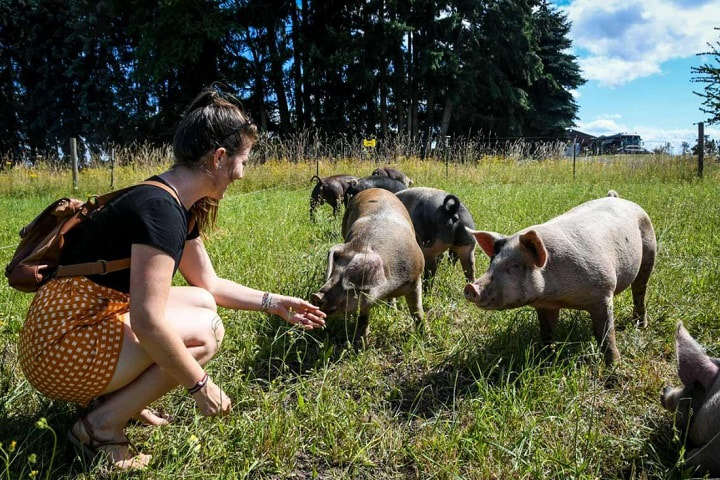 Farm and Food tours